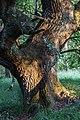 Senden, Venner Moor -- 2013 -- 2345.jpg