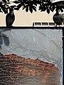 Sentinel Pigeons at Bus Station - Przemysl - Poland (36342903826).jpg