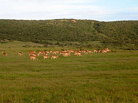 Shamwari Game Reserve, South Africa.jpg