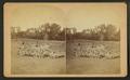 Sheep herding, by Conklin & Kleckner.png