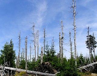 Waldschäden beschreiben den V