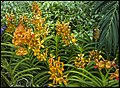 Singapore Sentosa Flower Garden-02 (23805718510).jpg