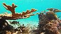 Snorkeling Bari Reef, Bonaire (12840799335).jpg