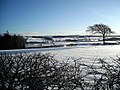Snow Covered Fields - geograph.org.uk - 1651525.jpg