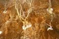 Somalia-Boswellia frereana-1.tif