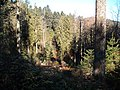 Sommerlicher Herbst Herrenstuhl - panoramio (16).jpg