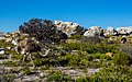 South Africa - Cape of Good Hope Trip (31506425884).jpg