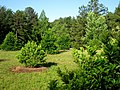 South Carolina Botanical Garden - arboretum 3.JPG