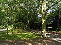 Southern End of Ashmore Green Village - geograph.org.uk - 35837.jpg