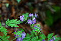 Spring-flowers-forest - West Virginia - ForestWander.jpg