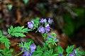 Spring-flowers-forest - West Virginia - ForestWander.jpg