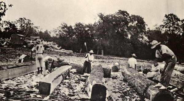 Men working in the mahogany industry, around 1930. Squaring mahogany.jpg