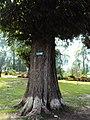 Srinagar - Shalimar Gardens 06.JPG