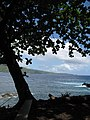 Starr-090623-1503-Terminalia catappa-habit view ocean-Nahiku-Maui (24873367821).jpg