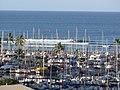 Starr-090729-3356-Cordia subcordata-habitat surf and Ala Wai small boat harbor-Ala Moana Hotel Honolulu-Oahu (24340033924).jpg