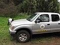 Starr-120329-4039-Delairea odorata-habit with Juliana collecting for biocontrol project with DOA truck-Kula-Maui (25138253295).jpg