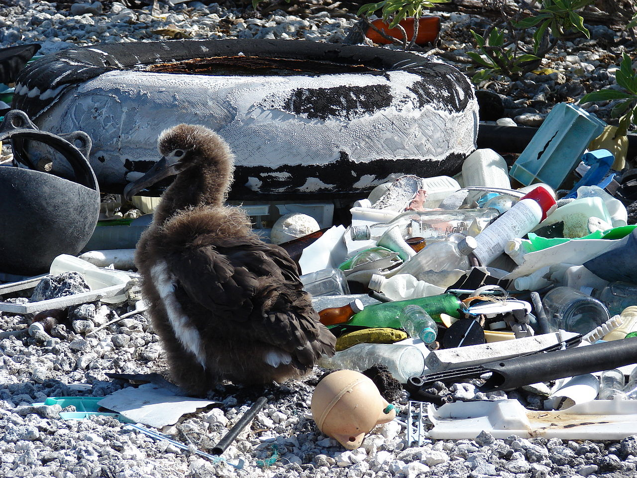Waste Free Bird Food