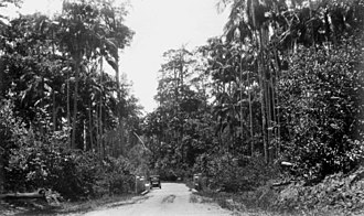 Forest Glen, Queensland - Motor vehicle travelling along the North Coast Road, 1935