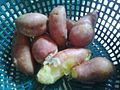 Steamed sweet potato.jpg