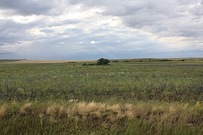 Steppe landscape in Sharlyksky District, Orenburg Oblast.jpg