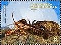Stone Crayfish (Austropotamobius torrentium ssp. macedonicus.jpg