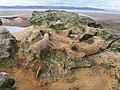 Strange rocks by Middle Eye - geograph.org.uk - 217909.jpg