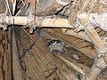 Swallows' nest in a roundhouse - geograph.org.uk - 1473480.jpg