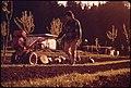 TONY OWEN ORGANIC FARM - NARA - 543017.jpg
