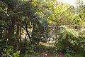 TU Delft Botanical Gardens 5.jpg
