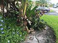"Tamarac, FL, USA - panoramio - William ""Patrick"" Ma… (1).jpg"