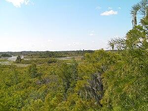Georgia (U.S. state) - Okefenokee Swamp, Georgia