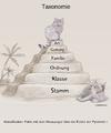 Taxonomie Wildkatze.png