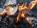 The House of Leaves - Burning 4.jpg