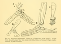 The Osteology of the Reptiles-195 dfgfdfg uyg.png