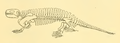 The Osteology of the Reptiles-235 hjjhghj gh jhg.png