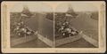 The Race at Mammoth Park, Long Branch, N.J, from Robert N. Dennis collection of stereoscopic views 3.png