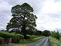 The Road to Saxby All Saints - geograph.org.uk - 172147.jpg
