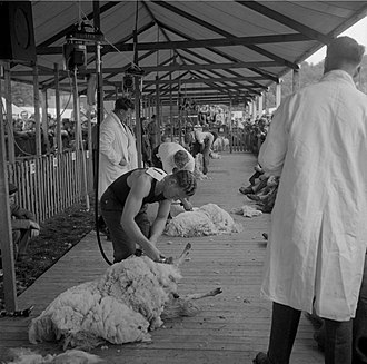 Royal Welsh Show - Image: The Royal Welsh Show 1963