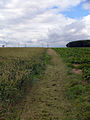 The Viking Way - geograph.org.uk - 486753.jpg