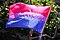 The bisexual pride flag (3673713584).jpg