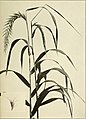 The book of grasses - an illustrated guide to the common grasses, and the most common of the rushes and sedges (1912) (14761344194).jpg