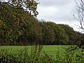 The edge of West Woods - geograph.org.uk - 278338.jpg