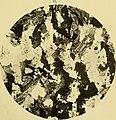 The geology of the goldfields of British Guiana (1908) (14597913797).jpg