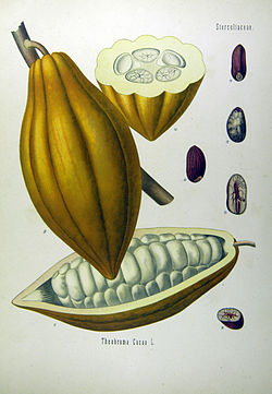 Theobroma cacao - Köhler-s Medizinal-Pflanzen-137.jpg