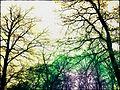 Threesome of color - panoramio.jpg