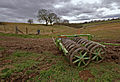 Towards Low Hunsley Plantation.jpg