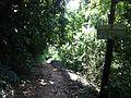 Trail to Waterfall - panoramio (5).jpg