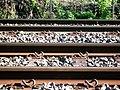 Train tracks in Coledale.jpg