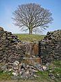 Tree (3374039094).jpg