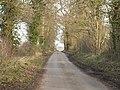 Tree Lined Lane - geograph.org.uk - 313805.jpg